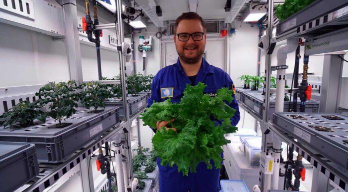 Researchers harvest Antarctic greenhouse vegetables