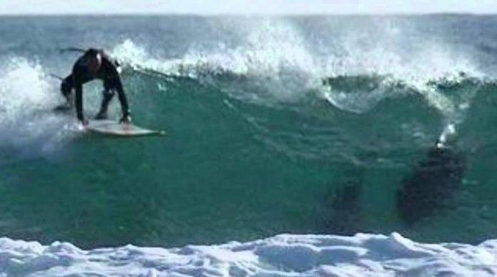 Shark attack halts Australia surf competition (Video)