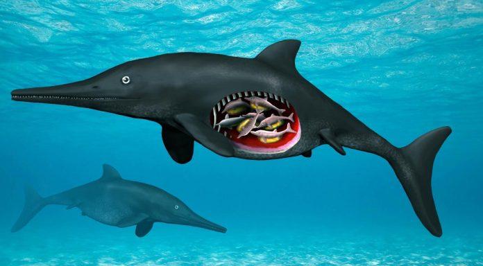 Study: 180 Million-year-old Pregnant Ichthyosaur