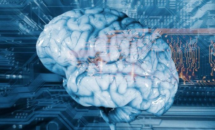 Researchers Unveil Research On New Freeze Response In The Brain