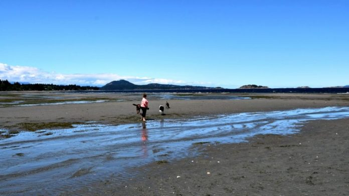 Report: Lowest tides in years expose Island seashore