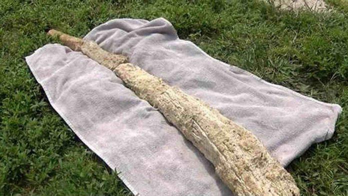 Cape Coral: Mammoth bone found at construction site (Picture)