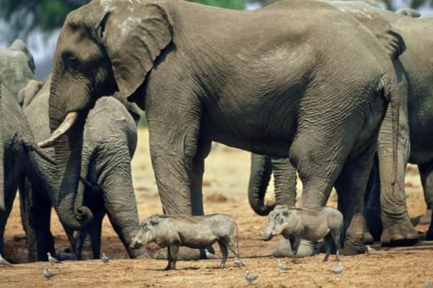 Elephant kills German tourist in Zimbabwe as she tried to take photo