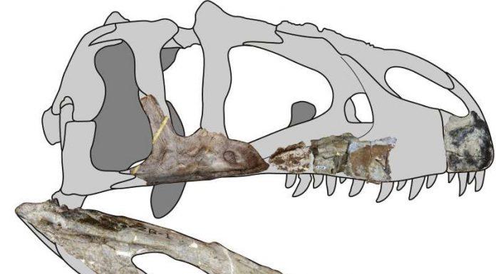 Study: New giant predatory dinosaur species found in Thailand