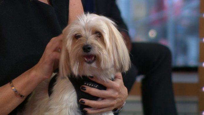 Study: Owning a dog 'may increase length of life'