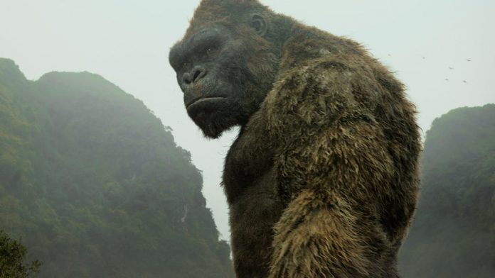Research: Ancient King Kong-like ape likely stood 10 feet tall