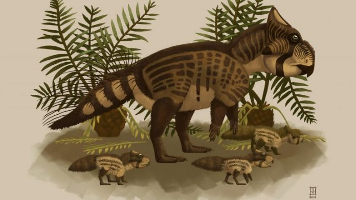Research: Discovery of BC's first unique dinosaur species