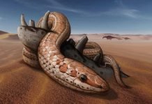 Research: Snake ancestors had legs, cheekbones 100 million years ago