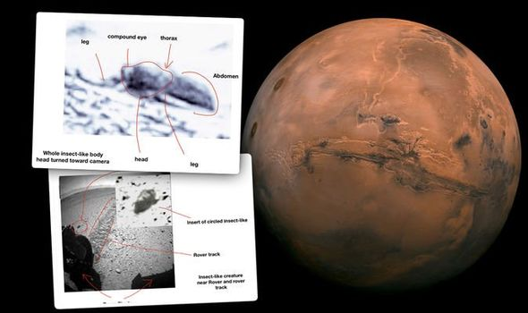 Researchers Reveal That They've Found Evidence of Insects on Mars