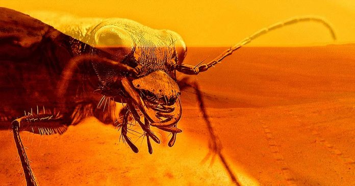 Scientist Claims to Have Discovered Insect-Like Life on Mars