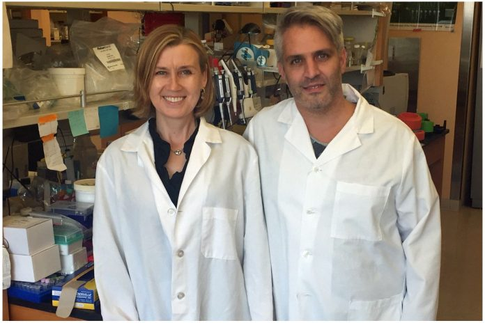 Scientists identify protein that governs human blood stem cell self-renewal