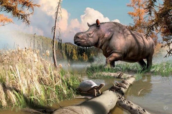Study: Ancient rhinos roamed the Yukon