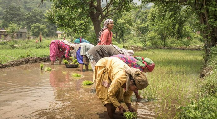 Study: Environmental stress negatively impacts women in climate hotspots