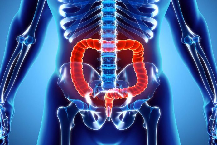 Study: New light shed on gut function