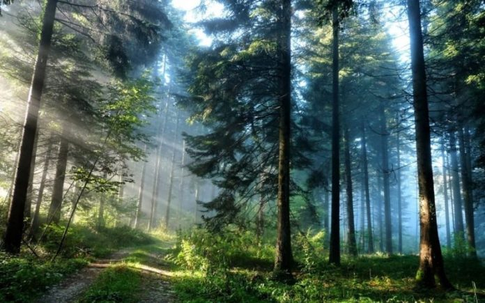 Researchers discover 385-million-year-old forest