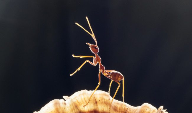 Scientists discover potential way to manage insects without chemicals
