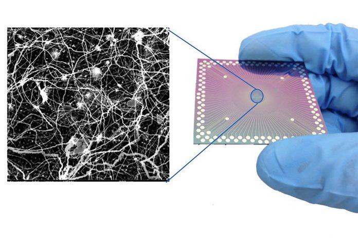 Scientists observe brain-like behavior in nanoscale device