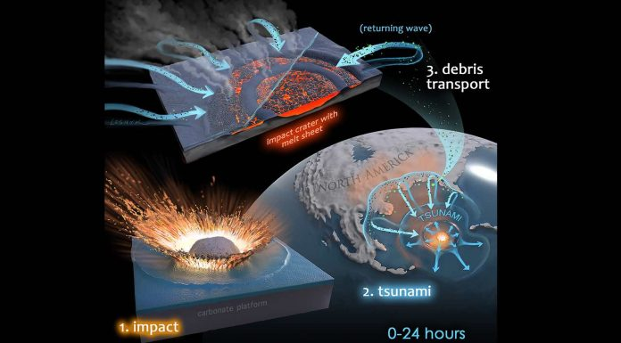 It was microbial mayhem in the Chicxulub crater, finds new research
