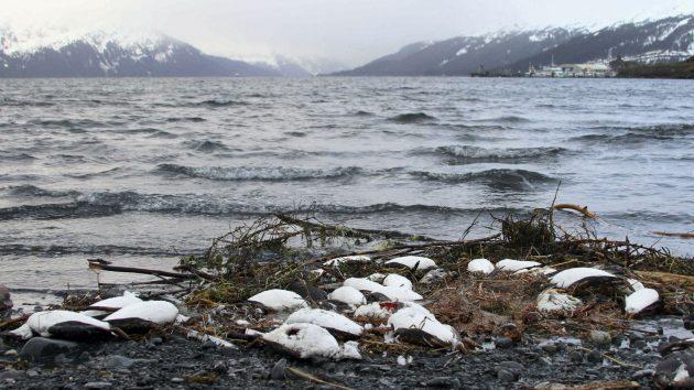 Pacific Ocea: Scientists say hot ocean