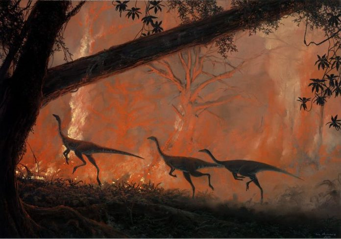 Study: Bushfires have reshaped life on Earth before