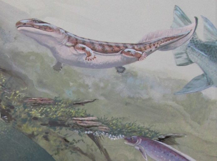 Study: Fossil expands ancient fish family tree