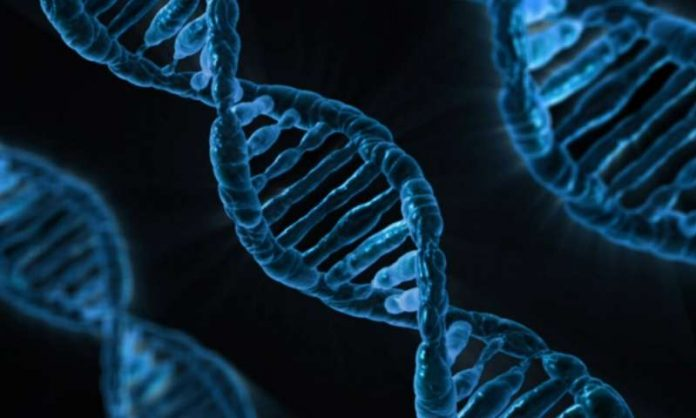 Study: New gene correction therapy for Duchenne muscular dystrophy