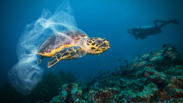 Study: Reassessing impacts of ocean acidification on fish behaviour
