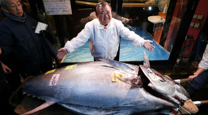 Tokyo: tuna sells for $1.8m at Japan's new year auction