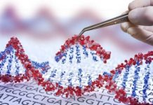 CRISPR gene cuts may offer new way to chart human genome
