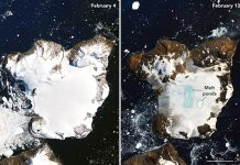 NASA satellite images reveal dramatic melting in Antarctica, Report