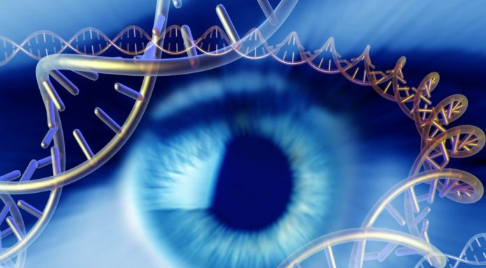 New gene therapy method improves vision in mice with congenital blindness -- Tdnews