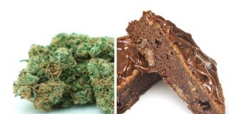 Report: Few consumers understand THC levels in cannabis edibles