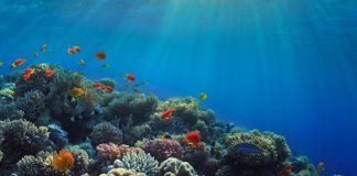 Report: Warming, acidic oceans may nearly eliminate coral reef habitats by 2100