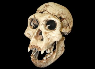 Research Suggests Early Humans Had Even More Interspecies Sex