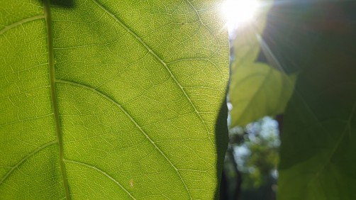 Researchers unravel mystery of photosynthesis
