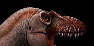 Scientists Discover New Type Of Tyrannosaurus And Name It 'Reaper Of Death'