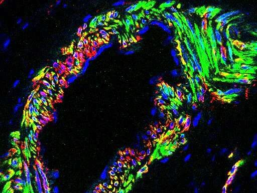 Scientists discover new details of pathway essential to fertility