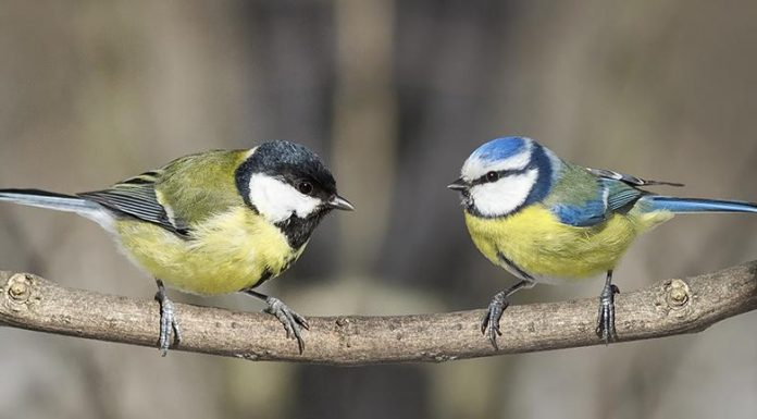 Study: Watching TV helps birds make better food choices