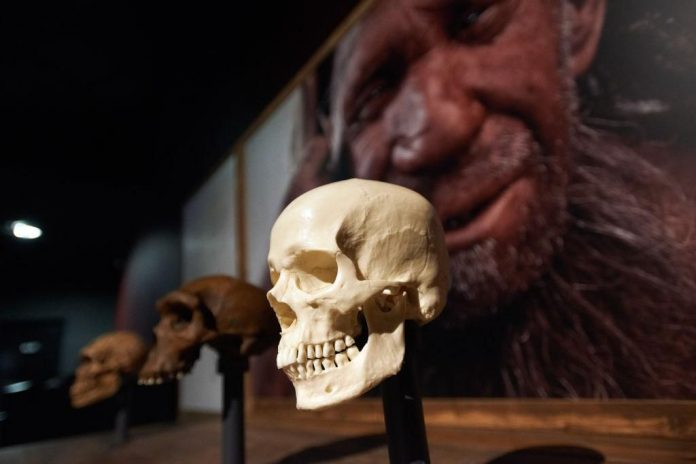 Report: Uniquely human cognitive abilities may have evolved by adapting ancestral asymmetry pattern