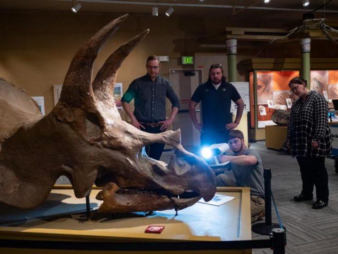 Study: 3D scan sheds new light on Boulder's own Triceratops