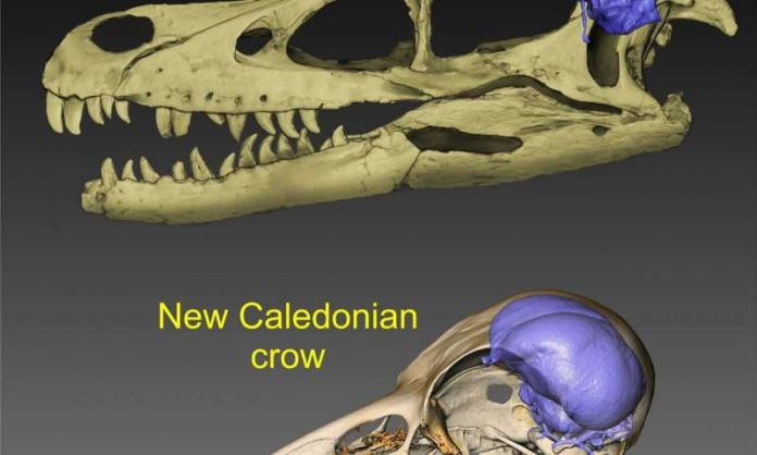 Brain evolution traced from tyrannosaurs to modern crows (Study)