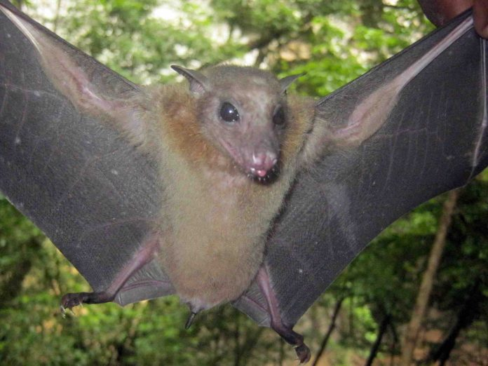 Report: Different groups of bats have their own unique strains of coronavirus