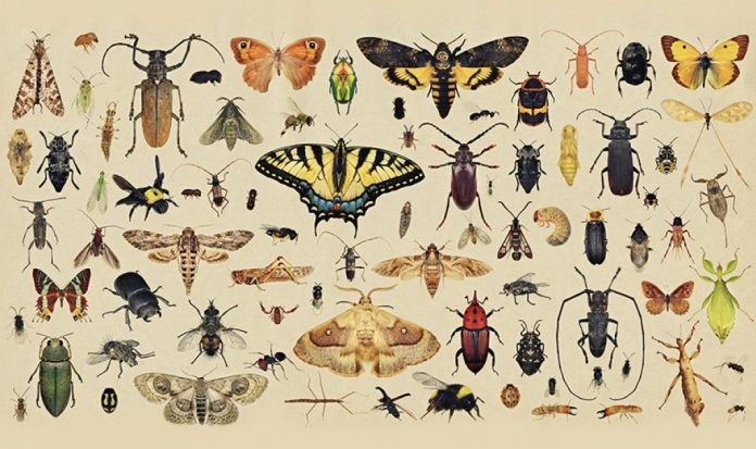 Report: Global insect populations show highly variable local trends