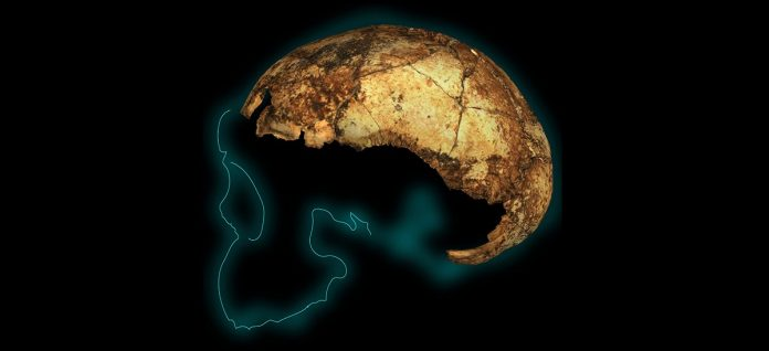 Report: When three species of human ancestor walked the Earth