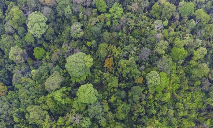 Study: Long-living tropical trees play outsized role in carbon storage