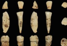 Study: Oldest ever human genetic evidence clarifies dispute over our ancestors