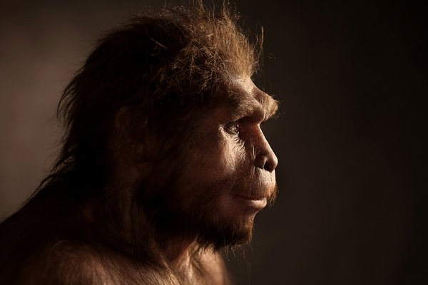 Study: Origins of human language pathway in the brain at least 25 million years old