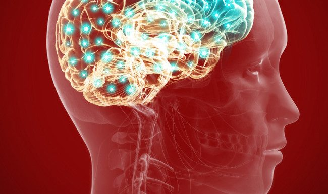 Study: Repairing stroke-damaged rat brains