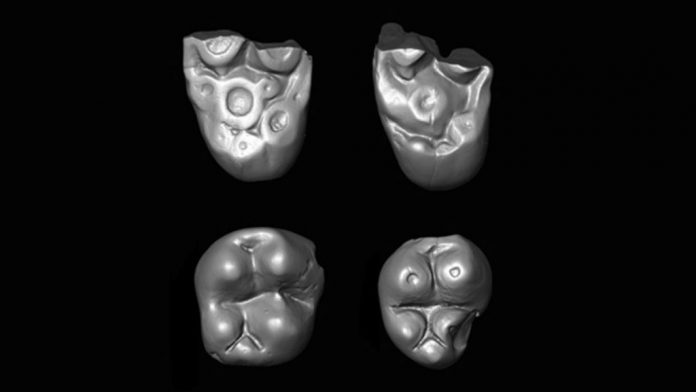 Study: Two primate lineages crossed the Atlantic millions of years ago