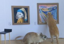 Tiny Gerbils Visit Tiny gallery With Custom Gerbil Art